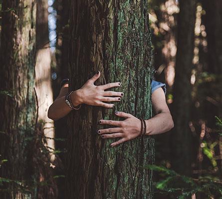 Banys de bosc cassà de la selva